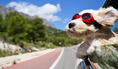 windy dog